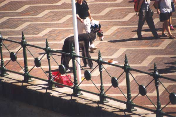 Busker dressed as a donkey at Circular Quay